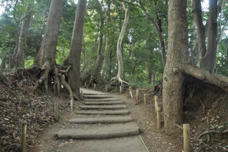 Randonnée au Mont Takao