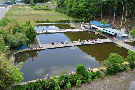 Centre de la carpe Spatula Crucian à Atsugi