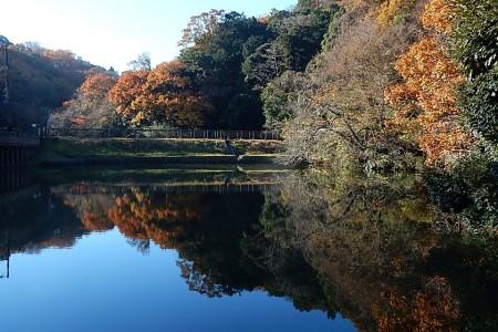 Vogelbeobachtung im Meotoike Park