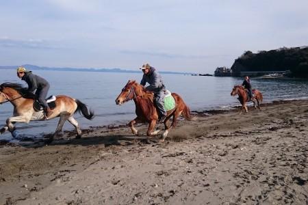 三浦海岸的骑马农场