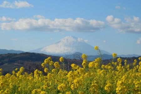 Tiếp xúc với những loài hoa ở Ninomiya