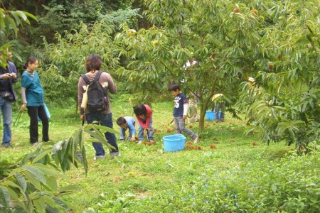 Suzukien Fruit Garden (Fruit picking)