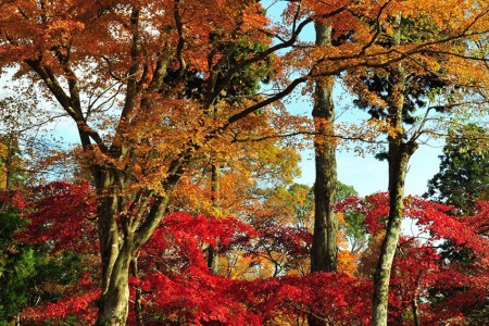 Master Yugawa's Godan Falls! Gorgeous momiji leaves along this hike on Tenshozan