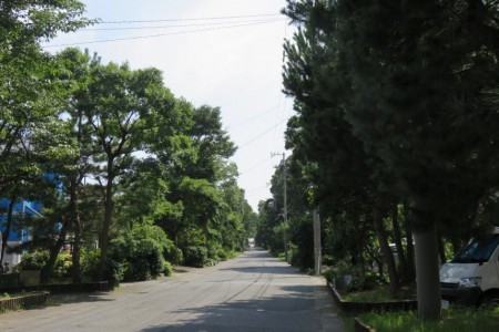 Kesho-zaka Matsu-namiki(Kesho hill lined with pine trees)