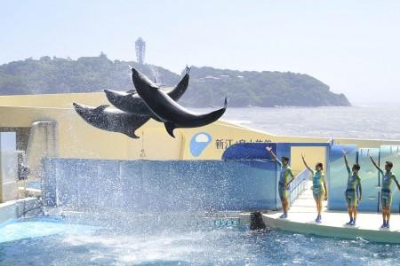 Aquarium d'Enoshima