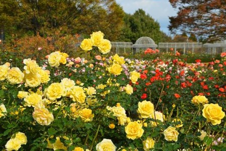 Le jardin des fleurs d'Odawara