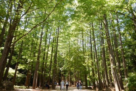 Refresh yourself in Ikuta Ryokuchi Park!