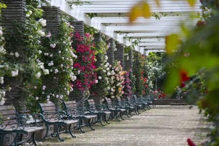 Vườn hoa hồng Ikuta Ryokuchi