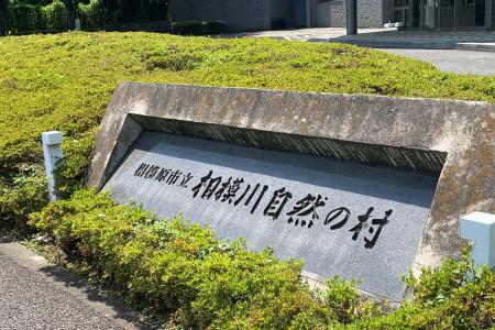 相模川自然之村(參觀大島櫻)