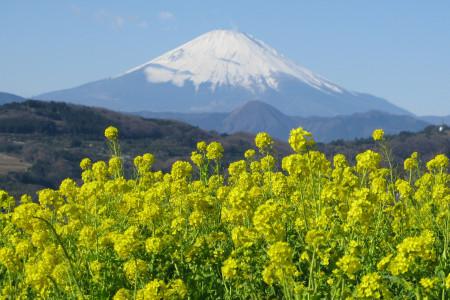 Nino-ya (Association touristique Ninomiya)