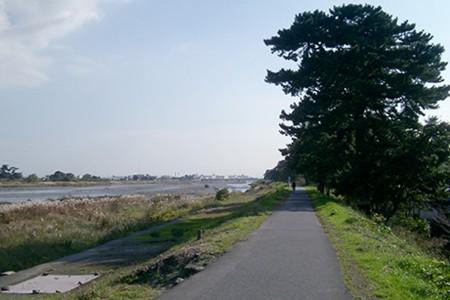 L'avenue des pins de Ninomiya Sontoku no Yukari
