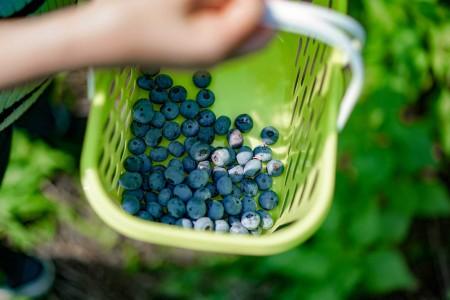Asahi Blueberry Garden