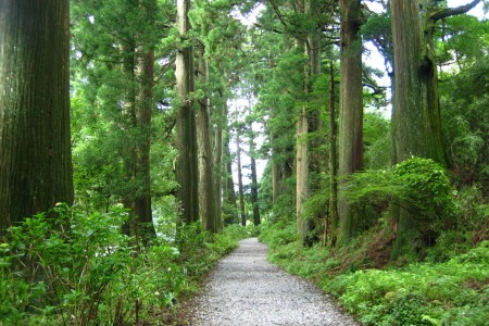 Old Hakone Highway Cedar-lined Road