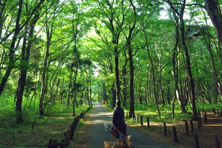 日光傾瀉之森