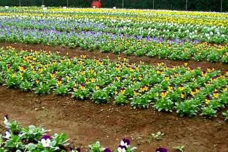 팬지 농원「가시마엔」