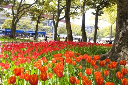 Công viên Yokohama