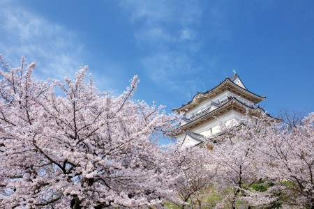 Le parc des ruines du château d'Odawara