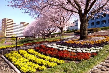 자마 시 카니가사와 공원