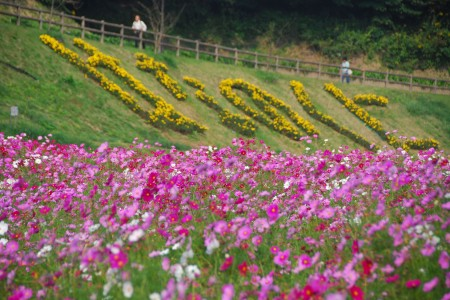 Kurihama Flower Country