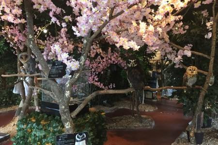 Forêt aux hiboux de Kamakura