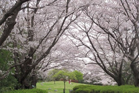 Enjoy Sankeien Garden for lovely seasonal flowers and views from Honmoku Sancho Park