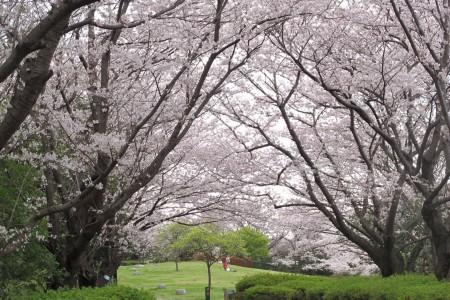 혼모쿠 산정공원