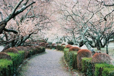 Vườn bách thảo Tsujimura