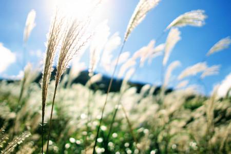 """Les plaines argentées de la """"Silver Grass Plant Community"""""""