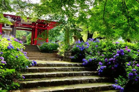 Daiyūzan Saijō-ji Tempel