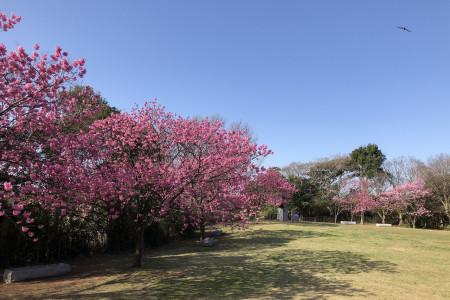 เริงร่าในสวนสาธารณะและสวนดอกไม้ในโยโกฮามะ
