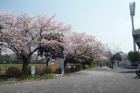 미쓰자와공원