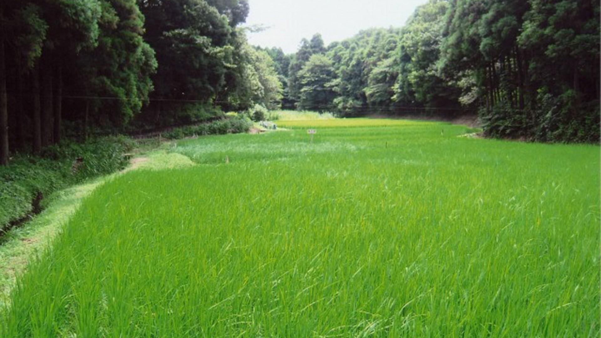 Fujisawa Sandai Yato