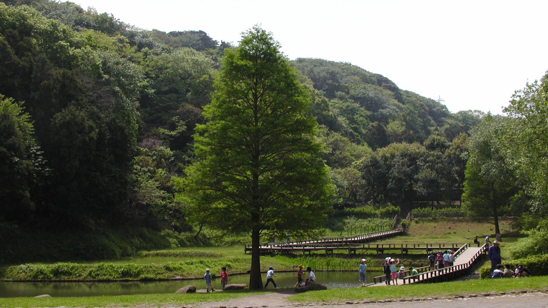 新林公園(散策・バードウォッチング)