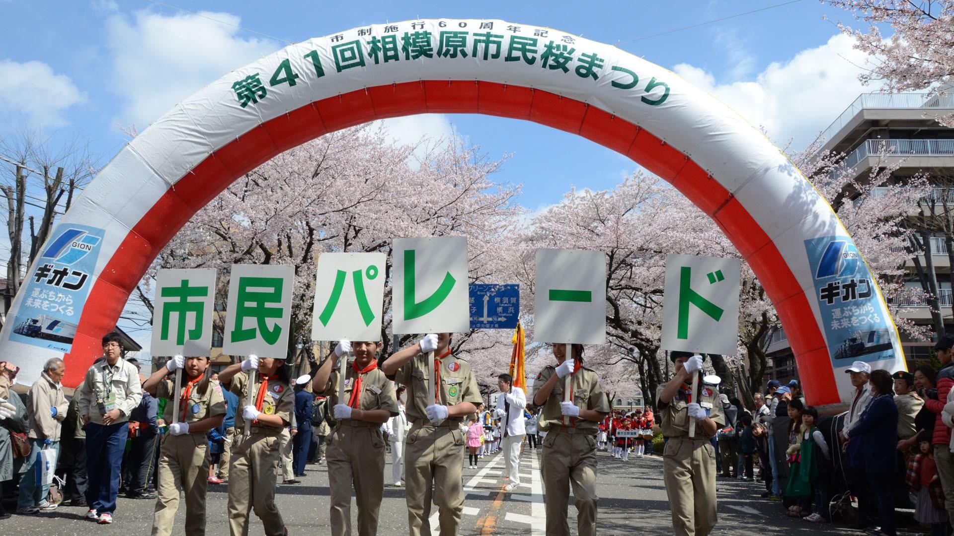 사가미하라 시민 벚꽃 축제