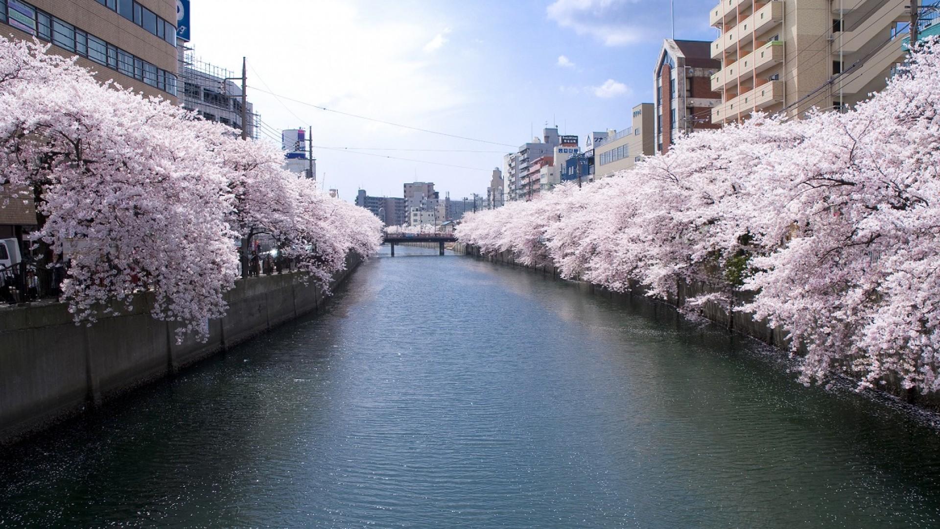 Promenade le long de la rivière Ooka