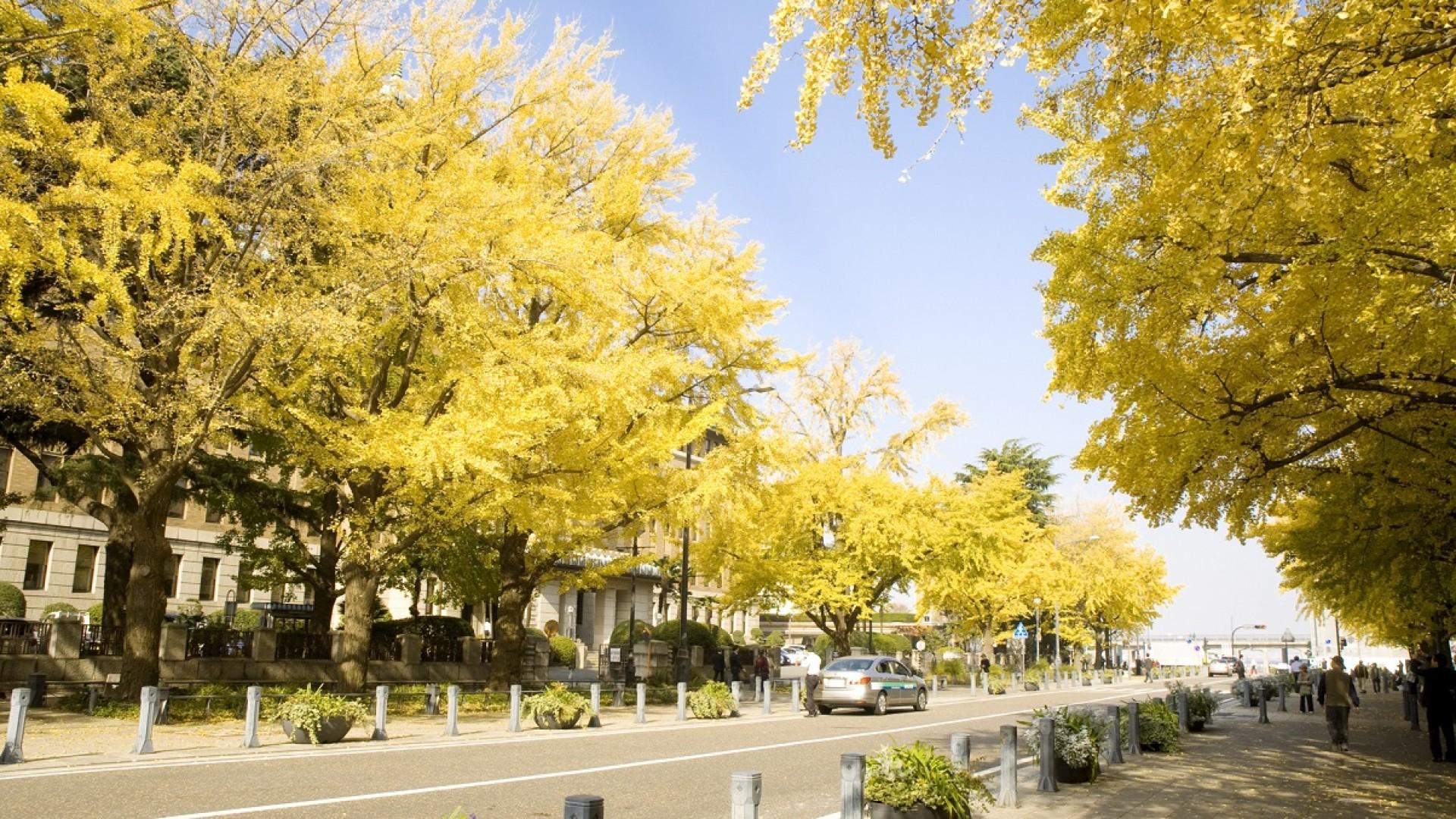 일본 거리