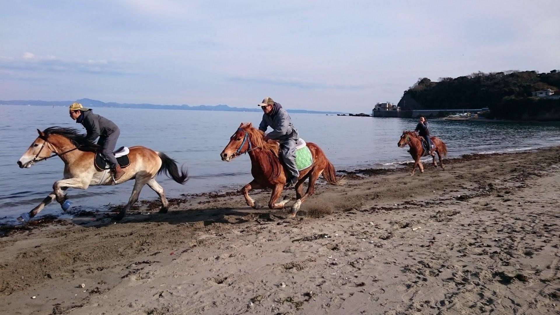 Horse Trekking Farm Miura Kaigan