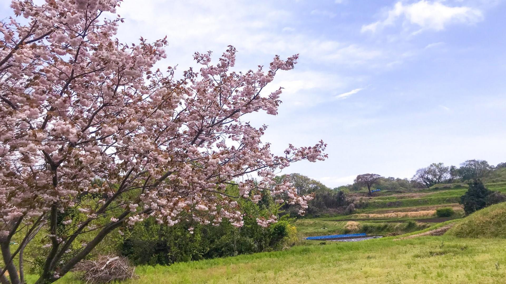 Kisawa Hakkei(Yurugino oka hill)