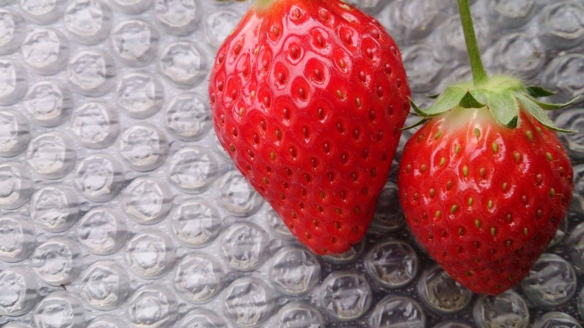 嘉山农场 体验草莓采摘