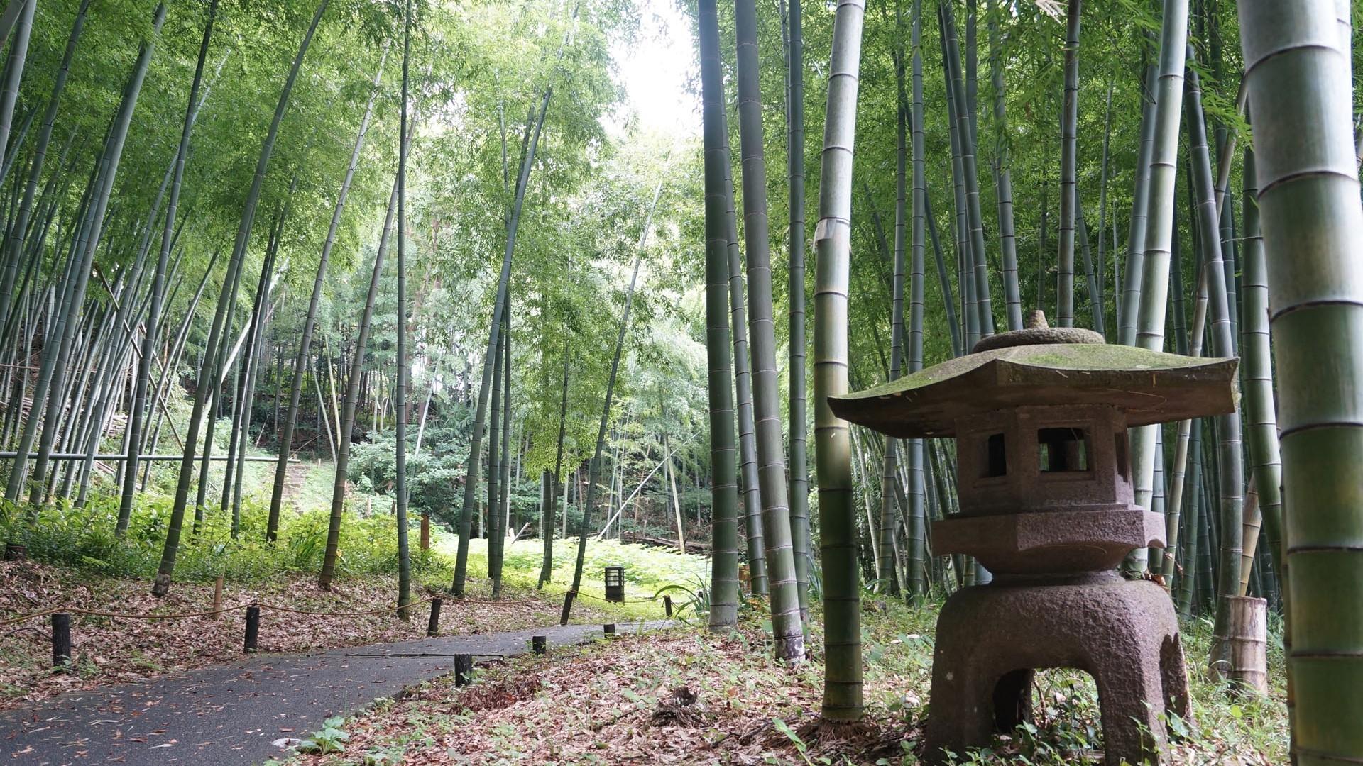 Le parc des ruines du château Arai