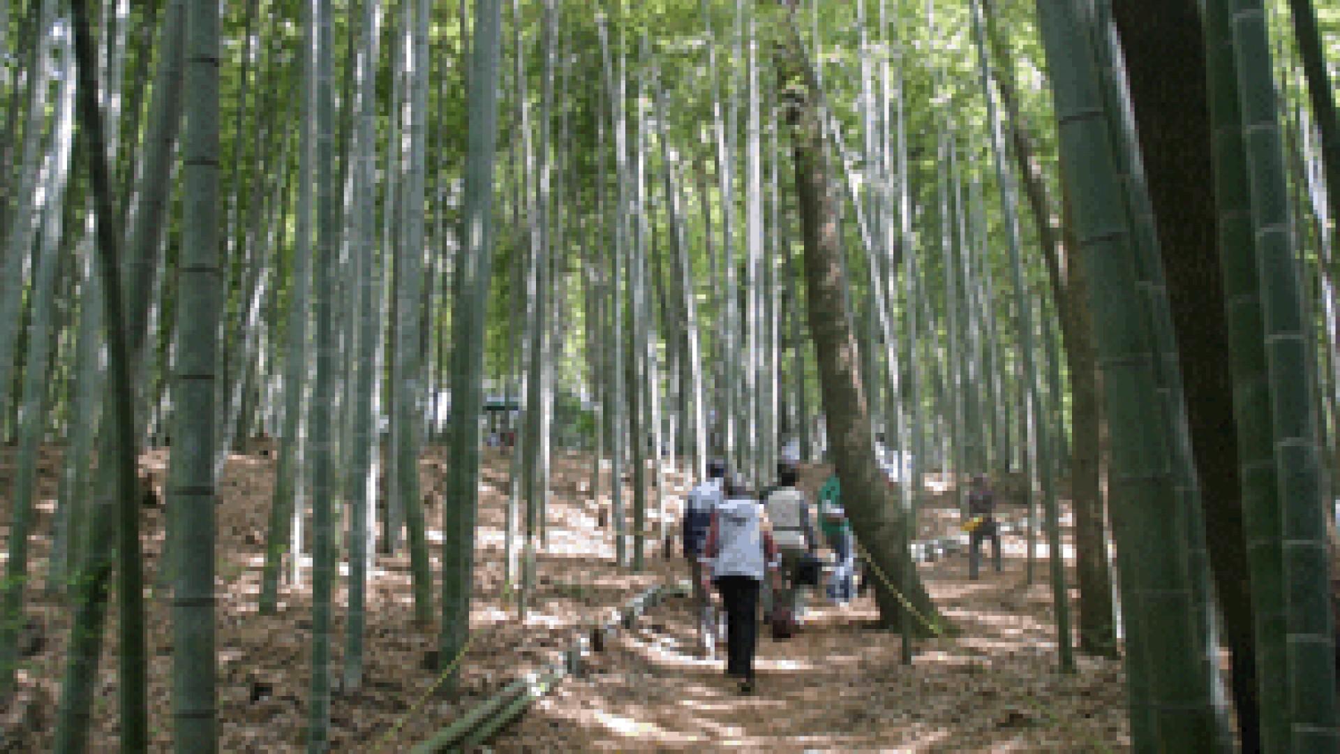 遠藤竹炭祭り