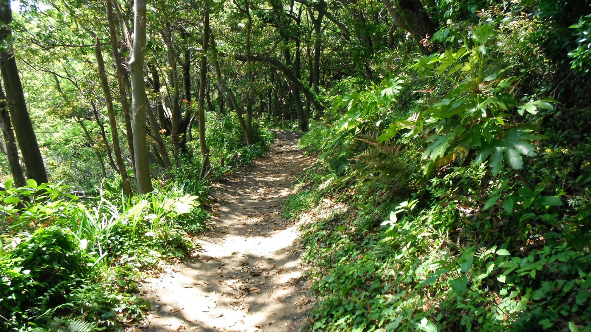 葉山 スタンドアップパドル体験 (葉山オーシャンスポーツ)