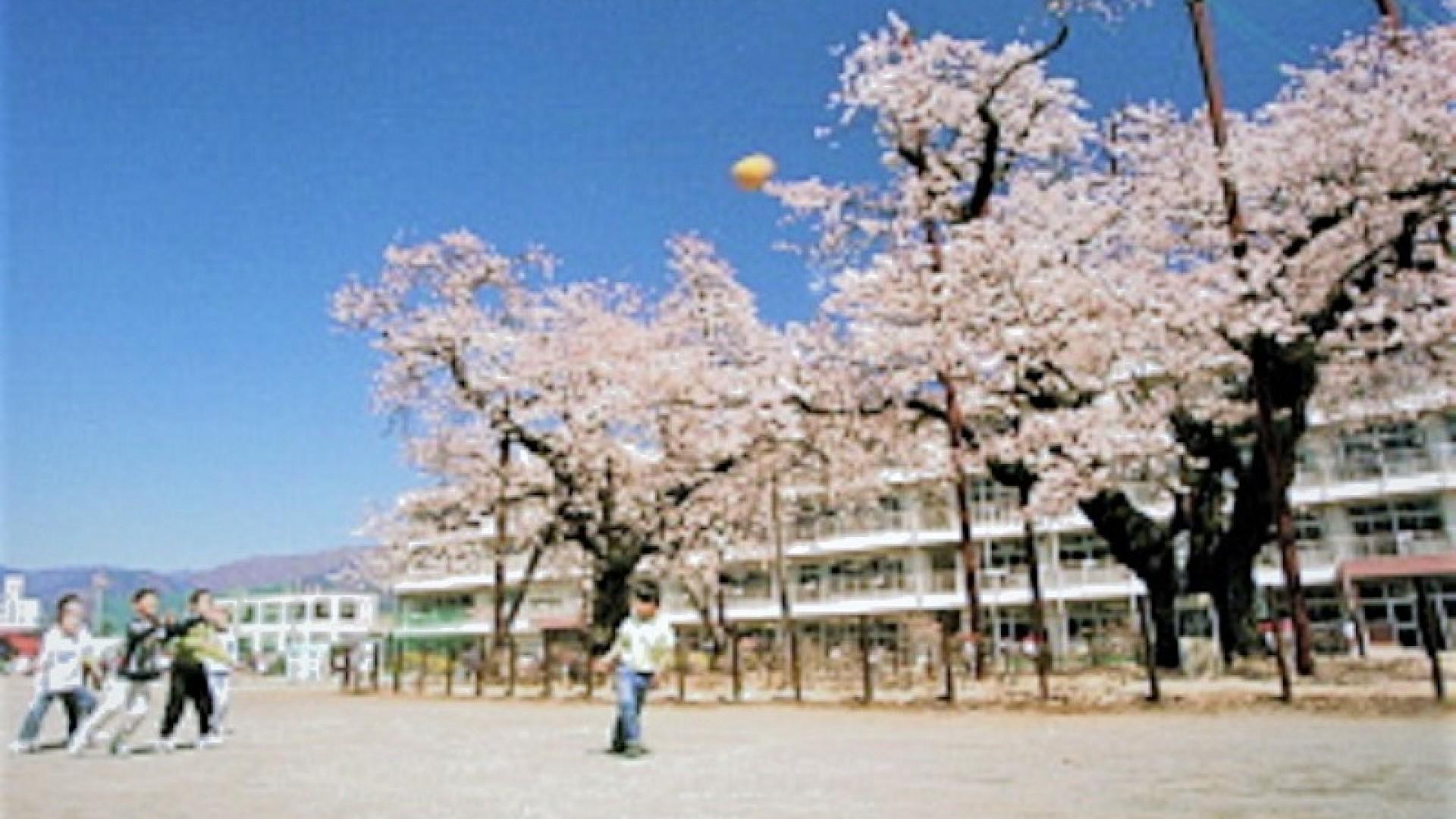 ชมดอกซากุระบานที่โรงเรียนประถมฮาดาโนะ ซิตี้ เซ้าท์