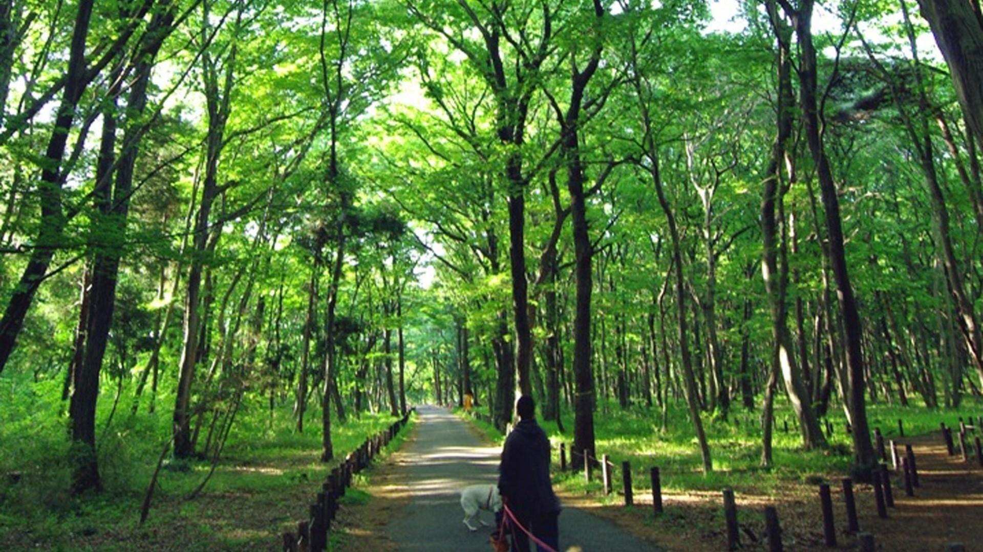 叶影流光之森
