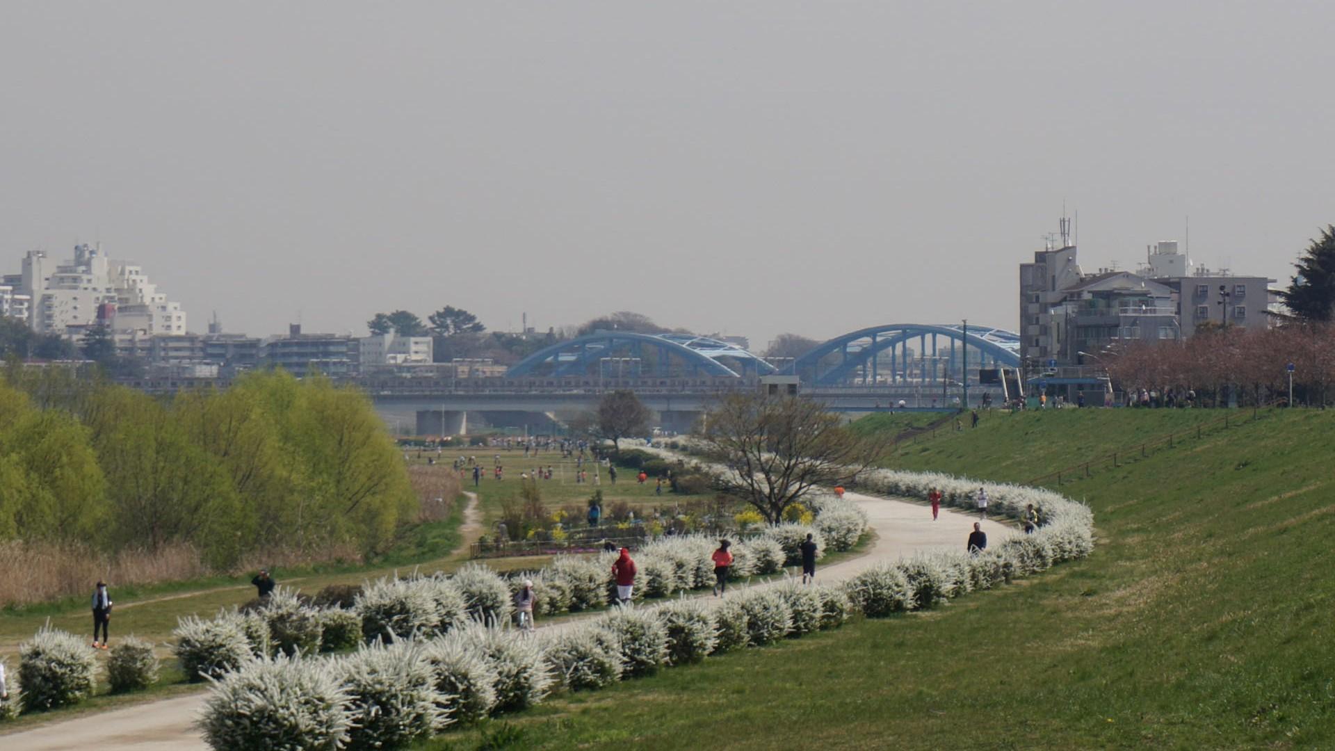 Tama River green space