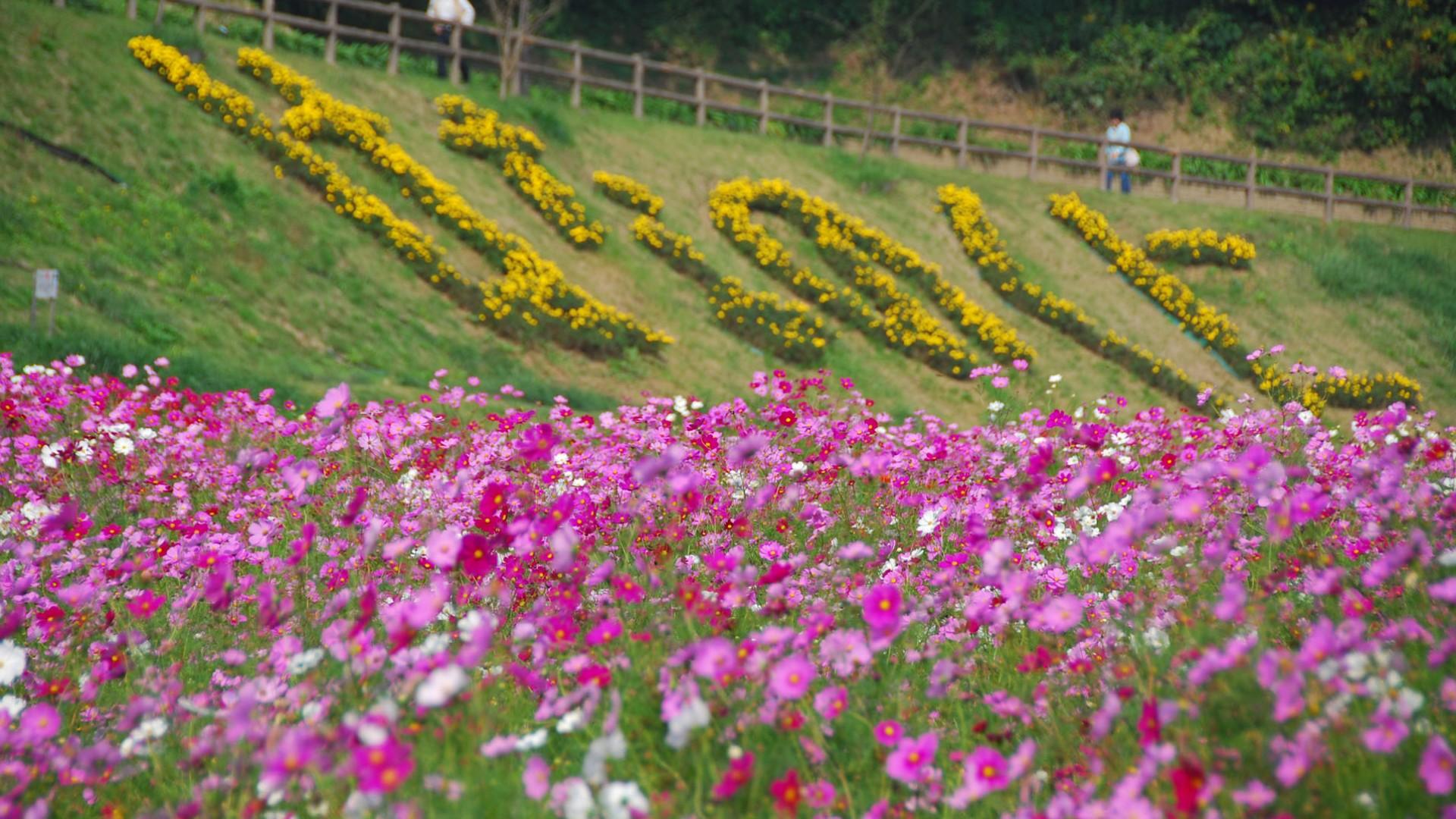 Công viên hoa Kurihama