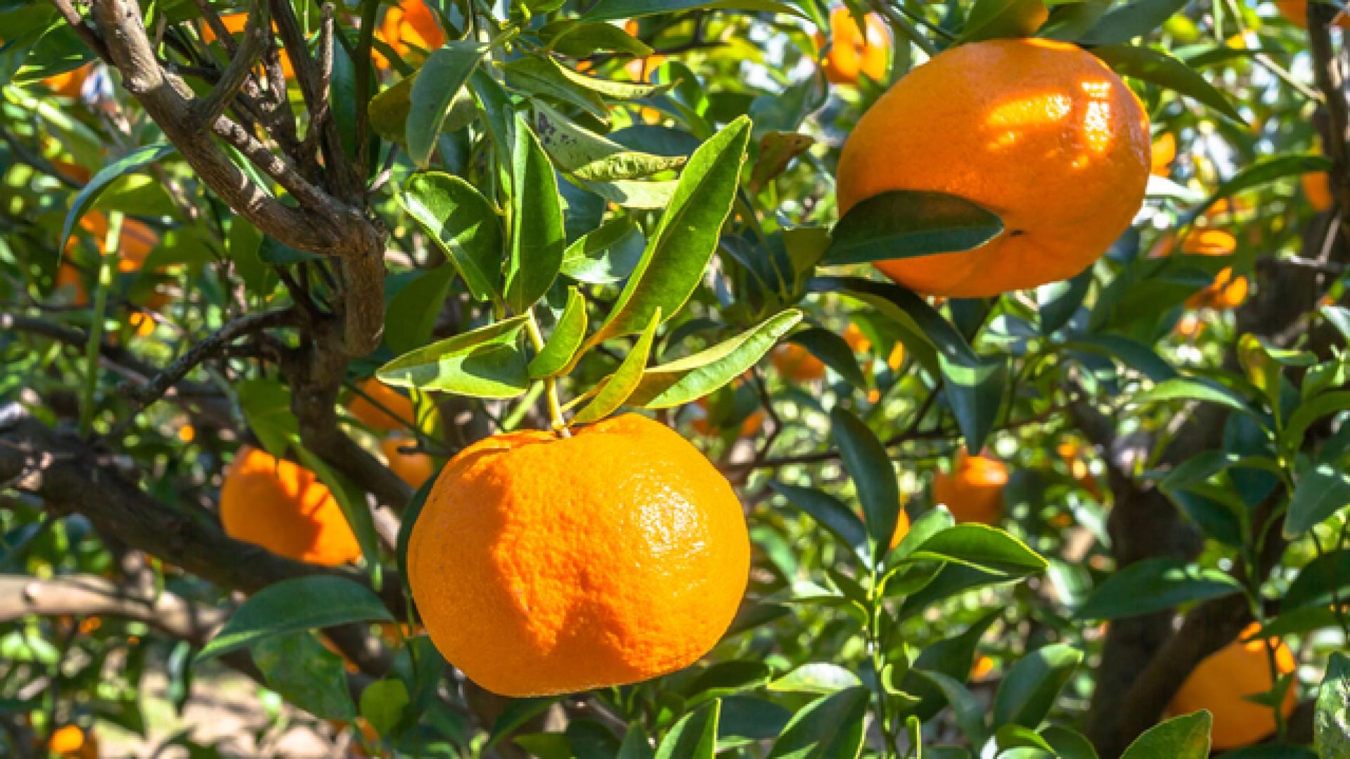 สถานที่เก็บส้มทะชิโระ-เอ็น
