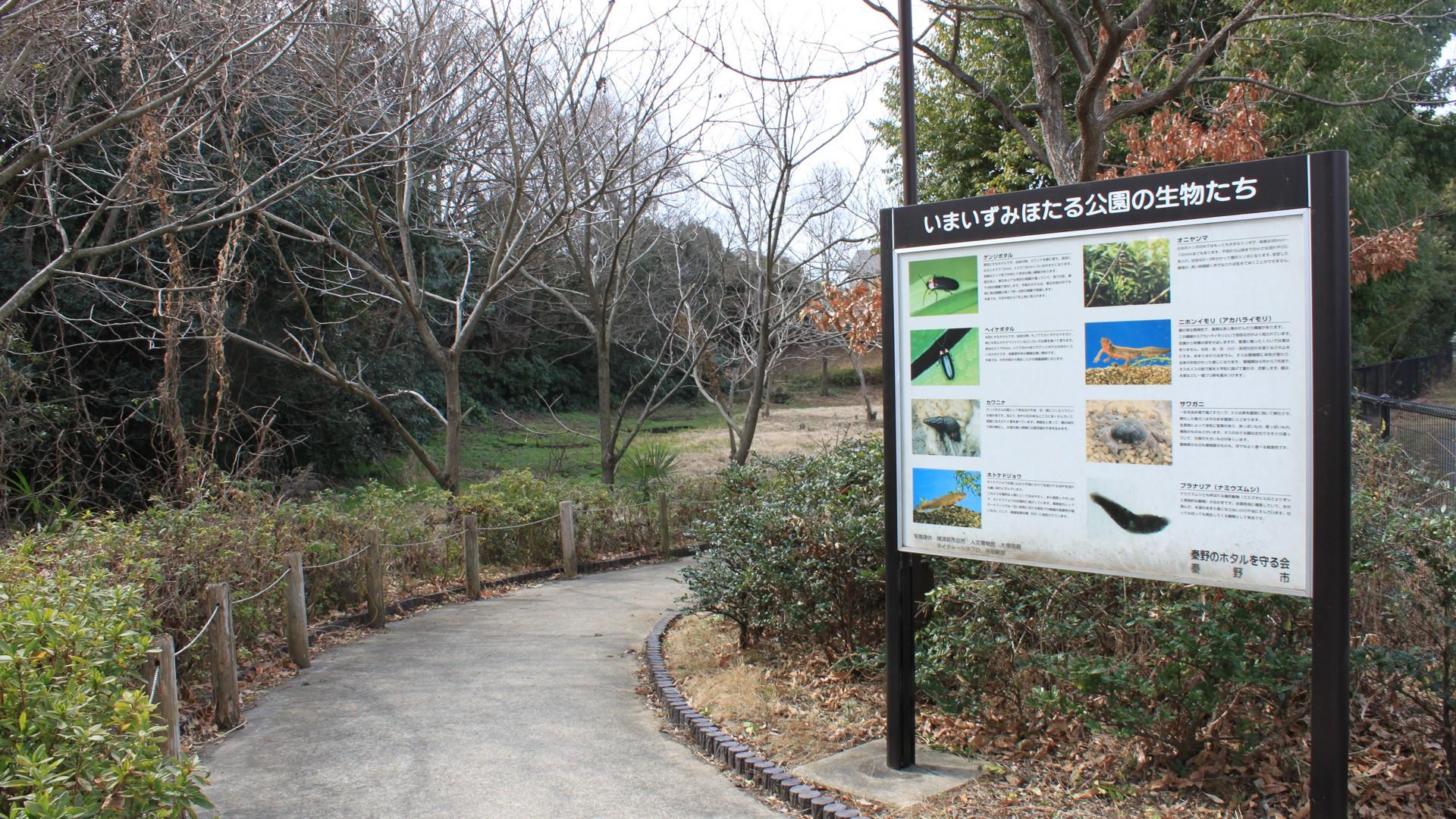 今泉萤火虫公园