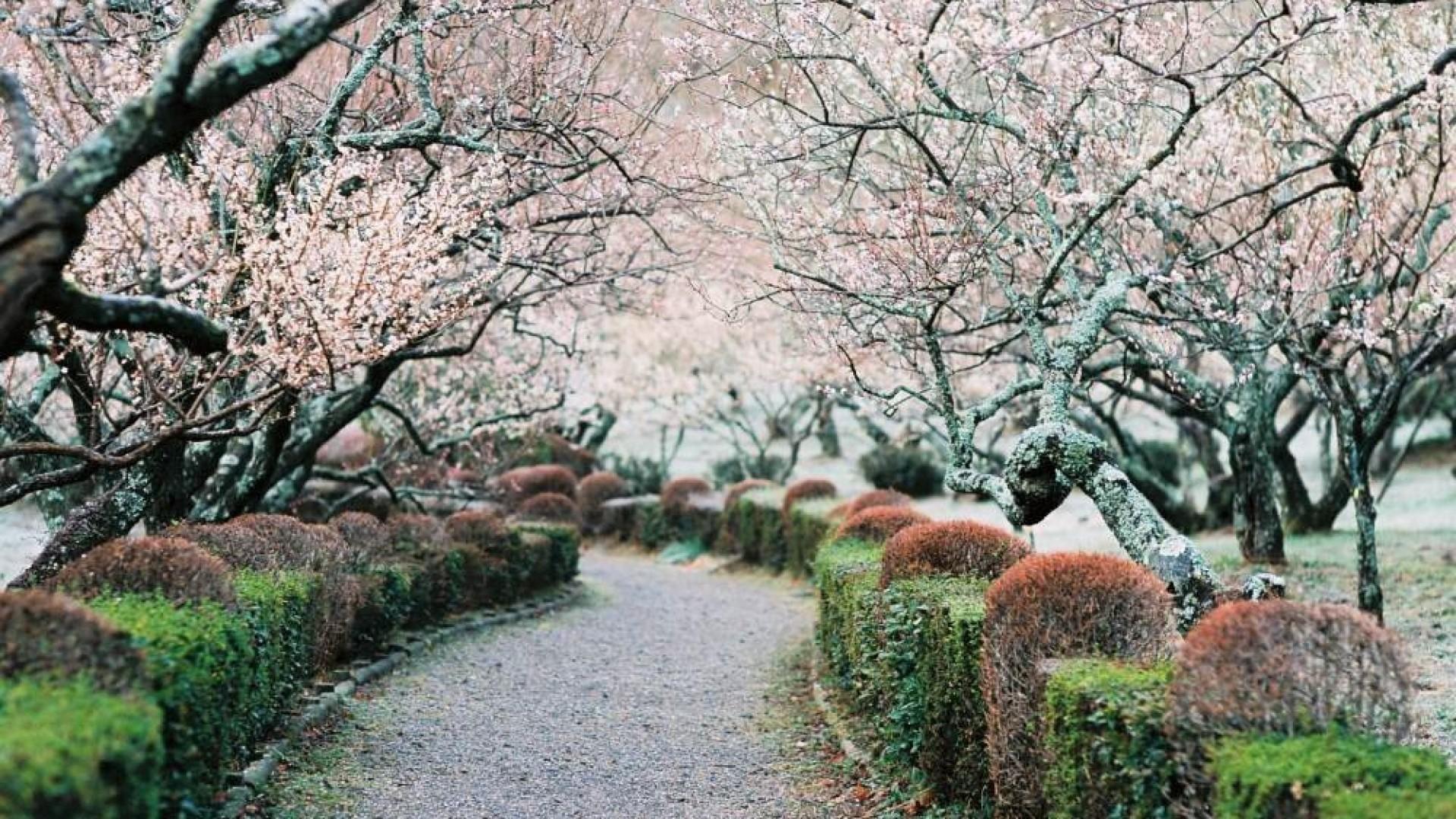 สวนพฤกษศาสตร์ซูจิมูระ