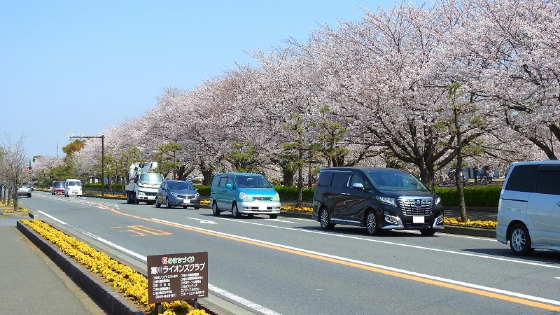寒川中央公园旁边的县道(开运富士山景点:大鸟居和富士山)